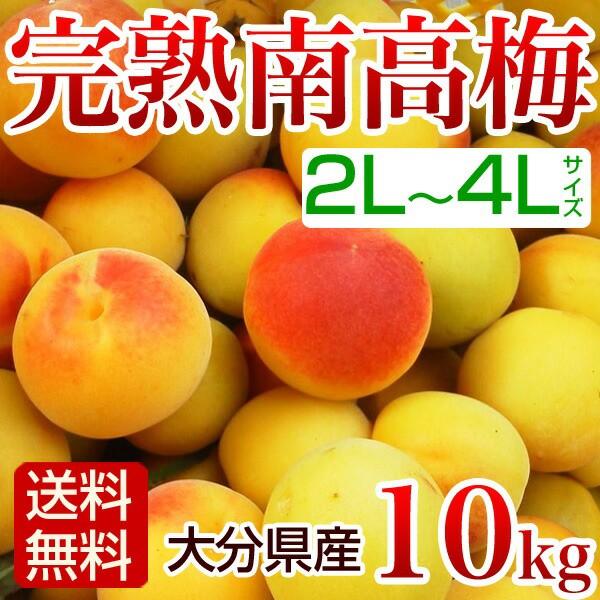 南高梅 完熟10kg  2L〜4L 梅干し用 梅酒用 生梅 ...