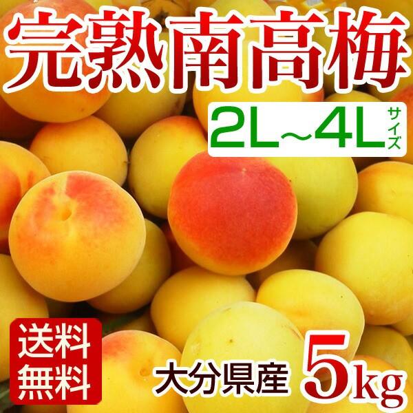 南高梅 完熟 5kg 2L〜4L 梅干し用 梅酒用 生梅 大...
