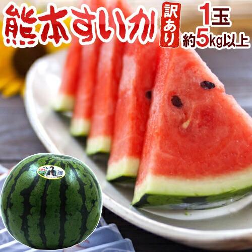 """【送料無料】熊本県 """"熊本すいか"""" 訳あり 約5kg..."""