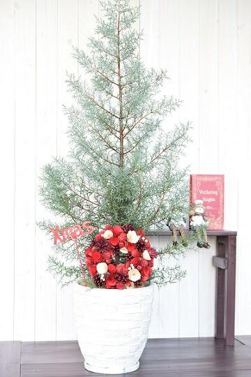 クリスマスツリー コニファー鉢植え 【ブルーア...