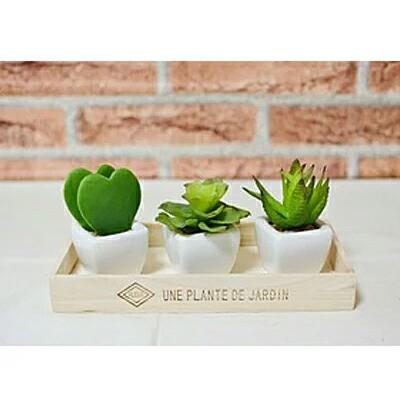 ●代引き不可【多肉植物3点セット】可愛い 多肉植...
