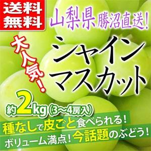 【送料無料】シャインマスカット 約2kg 山梨県勝...
