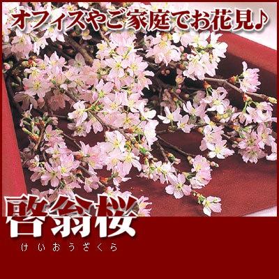 桜ギフト 啓翁桜の花束 お花見用桜の花束 ギフト