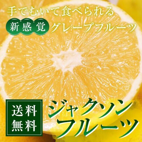 柑橘 新品種 送料無料 ジャクソンフルーツ 南アフ...