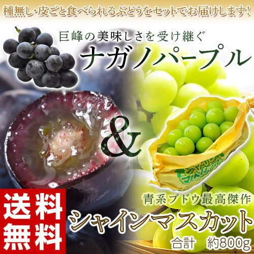 ぶどう 送料無料 「シャインマスカット&ナガノパ...