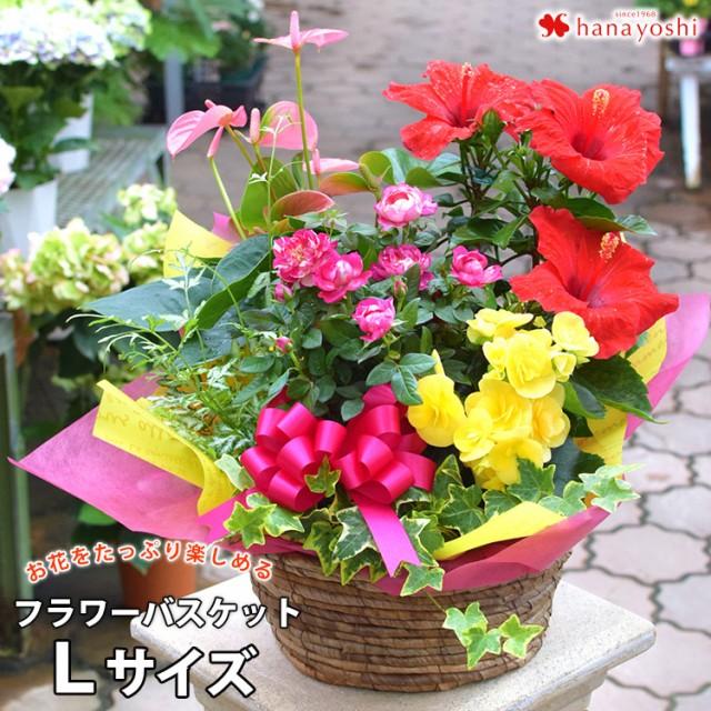 即日発送 季節のおまかせ花鉢とグリーンの寄せ入...