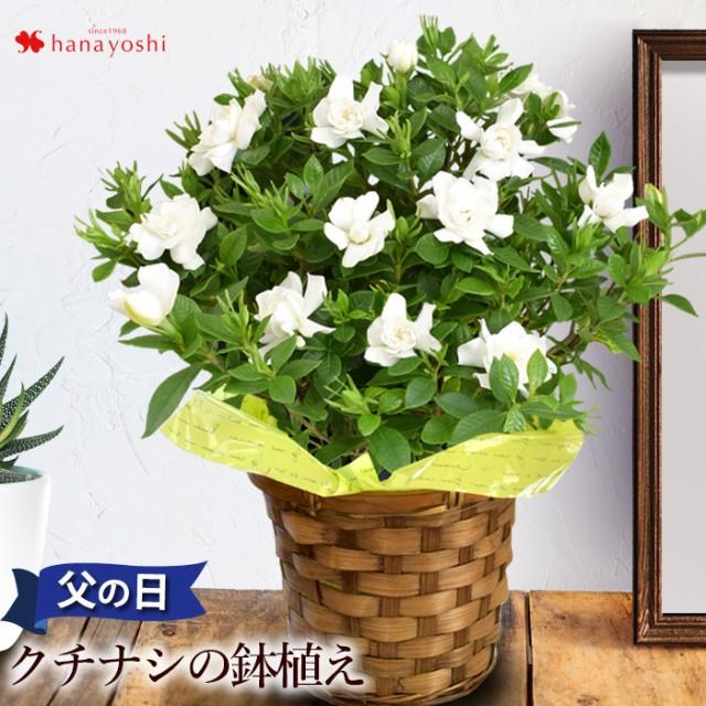父の日 プレゼント 花 2021 香りが楽しめる クチ...
