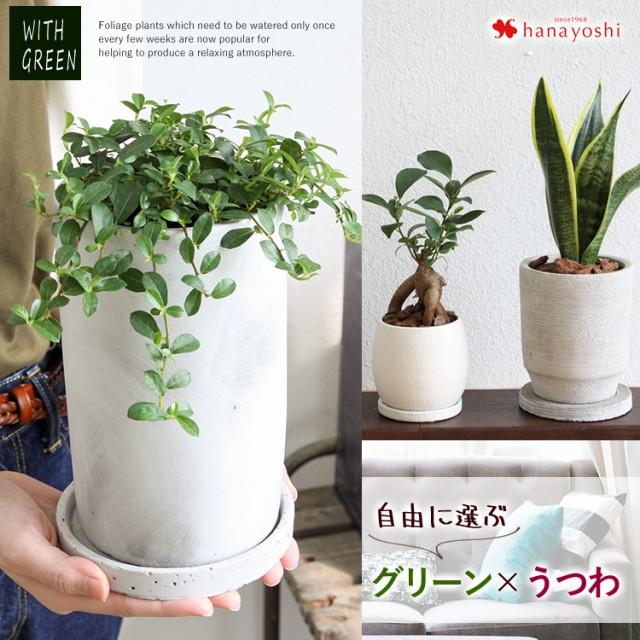 送料無料 自由に選ぶグリーン&うつわ 観葉植物 ...
