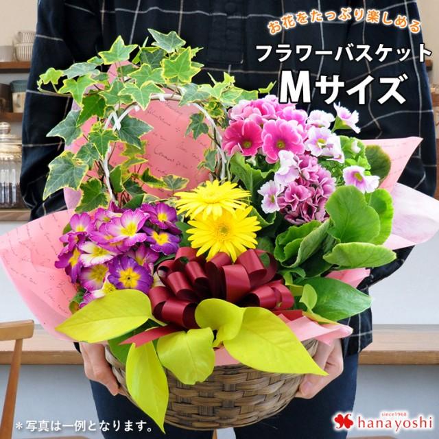 【送料無料】季節のおまかせ花鉢とグリーンの寄せ...