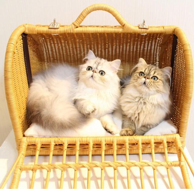 猫用品【N4スタイル】 ラタンキャリーマイン Mサ...