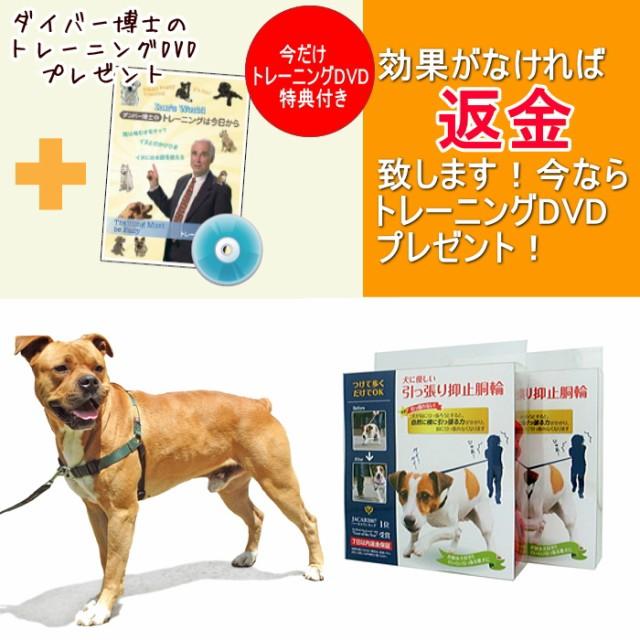 DVDおまけ付き【レッドハート】引っ張り抑止胴輪 ...