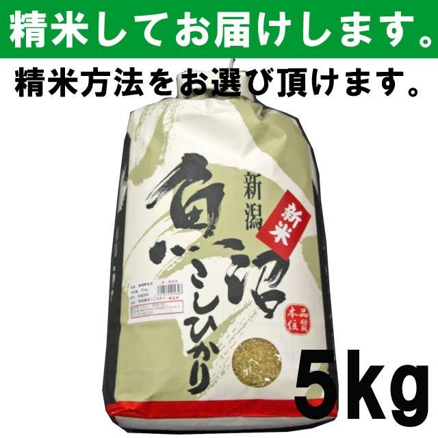 【平成30年度産】新潟県魚沼産こしひかり 一等玄...