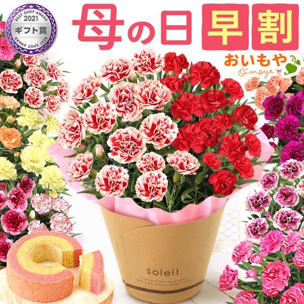 母の日 花とセット 早割 ギフト プレゼント 花鉢 ...
