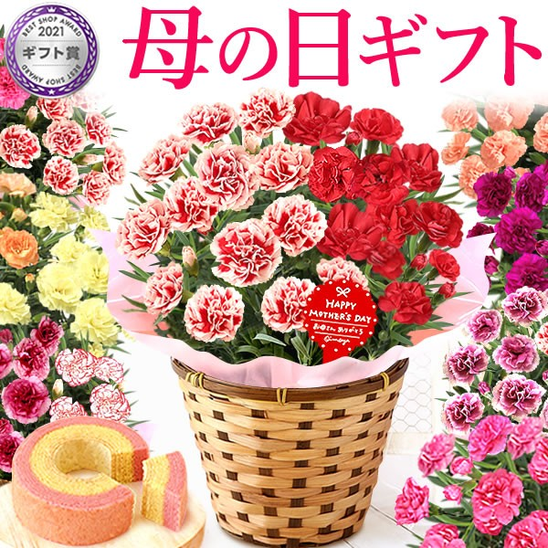 母の日  花とセット ギフト プレゼント 花鉢 寄せ...