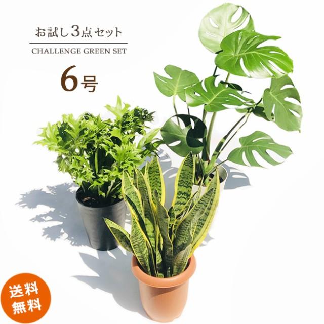 【送料無料】観葉植物お試し3点セット(6号)★何...