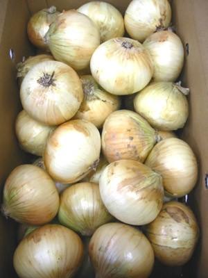 国産 玉ねぎ たまねぎ タマネギ 玉葱 1箱10kg