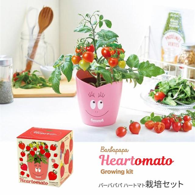 バーバパパ ハートマト 栽培セット