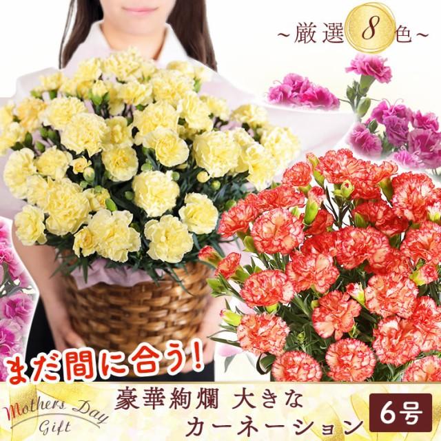母の日 カーネーション 6号 鉢花 花 ギフト 花ギ...