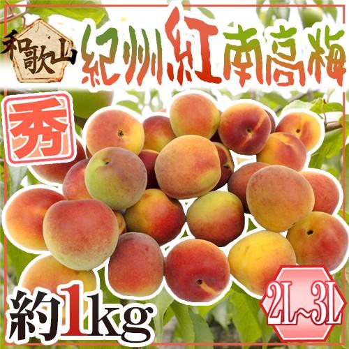 """紀州・和歌山産 """"紅南高梅"""" 秀品 2L〜3L 約1kg..."""