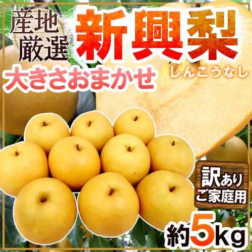 """【送料無料】""""新興梨"""" 訳あり 約5kg 大きさおま..."""