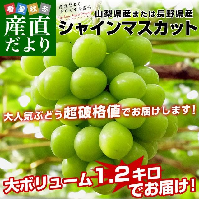 山梨県または長野県産 シャインマスカット1.2キロ(2房から3房)ぶどう 葡萄
