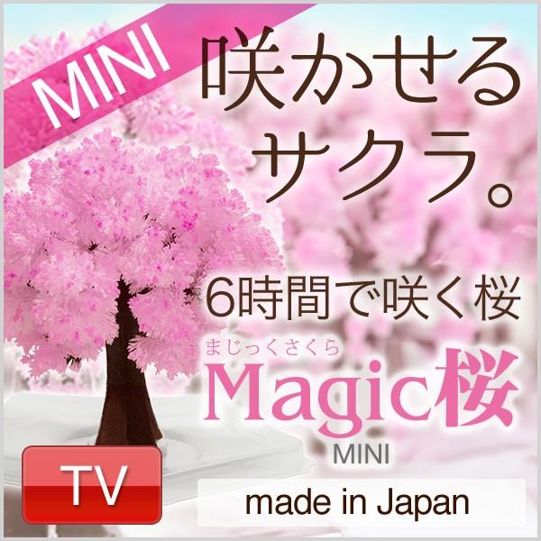 マジック桜 ミニ 6時間で桜の様にモコモコ育つ Ma...