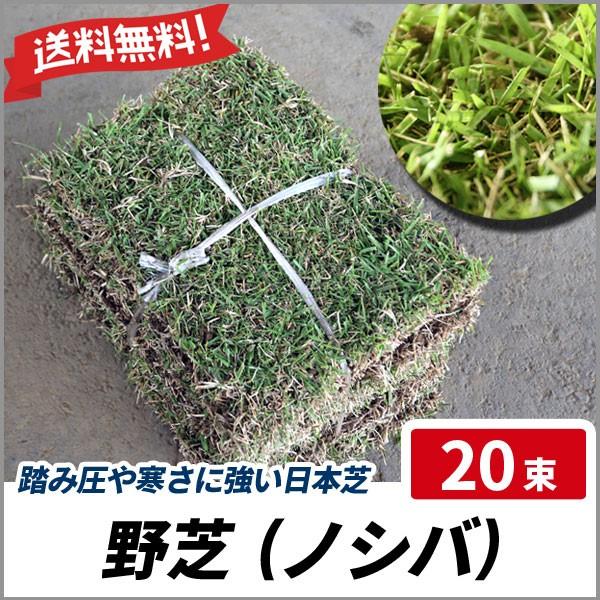 【送料無料】 野芝 (ノシバ) 20束 グランドカバー...