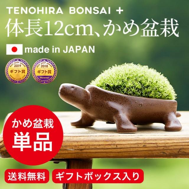 (送料無料)盆栽 ギフト 亀盆栽(こけ盆栽 コケ盆栽...