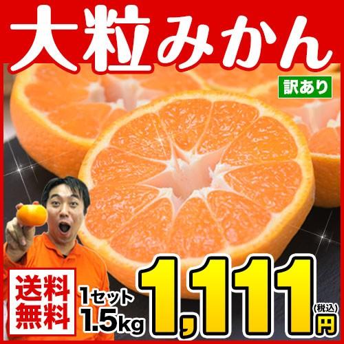みかん 訳あり 大粒 1.5kg 熊本 ミカン 青島系みかん 1月中旬-2月上旬頃順次出荷予定 温州 家庭用 果物 柑橘 九州