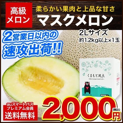 ■年末!大感謝■ 名産地熊本より直送 約1.2kg以...