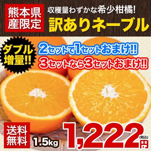 ネーブルオレンジ1.5kg送料無料訳あり熊本県産2セ...