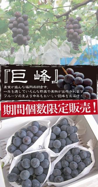 【送料無料】フルーツの里あさくらより 巨峰