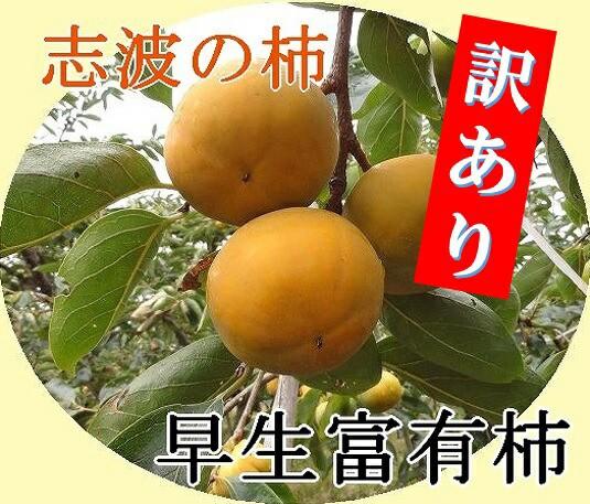 【送料無料】訳あり!志波柿 早生富有柿 M-L混合...