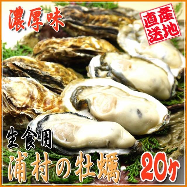 【送料無料】殻付き牡蠣[20ケ入]ナイフ付き★生食...