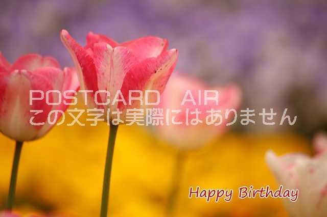 【誕生日のお祝いポストカード】「Happy Birthday...
