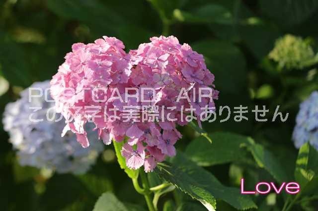 【激励のポストカード】「Love」ハート型紫陽花の...