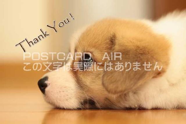 【犬のポストカードAIR】「Thank You 」 英語であ...