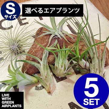 【種類選べるSサイズ5種】【エアープランツ】7種...