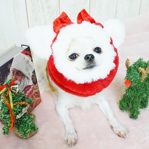 GODPIVA Nyao!サンタスヌード 犬用 Mサイズ
