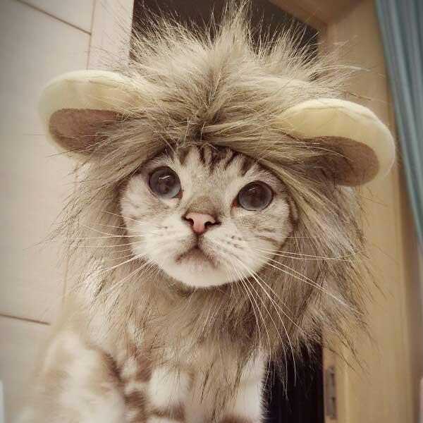 【ペット用品】ライオンになれる!?犬ネコ用 ラ...
