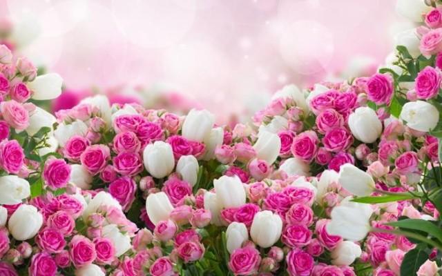 絵画風 壁紙ポスター ピンクのバラと白いチューリ...