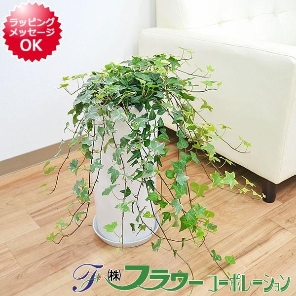 【送料無料】観葉植物 アイビー(ヘデラ)3種寄せ植...