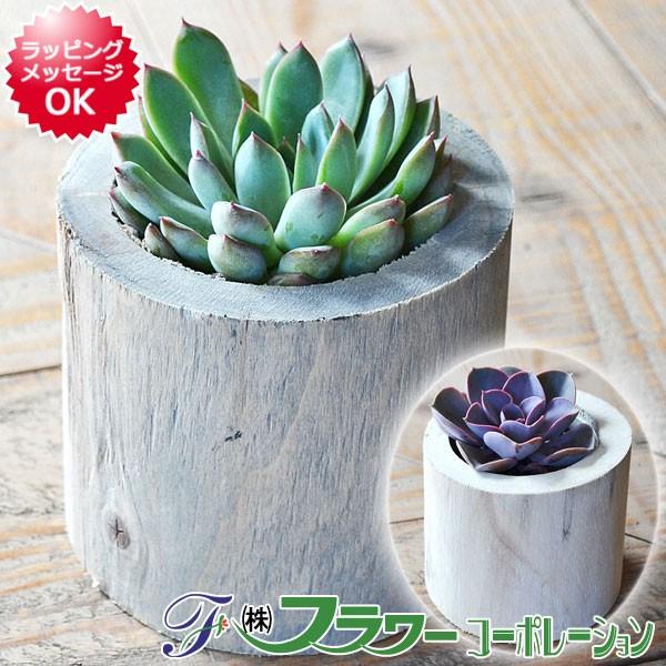 【送料無料】多肉植物 木製ポット