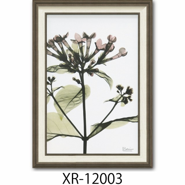 絵画 インテリア 壁掛け ブバルディア X-RAY 花柄...