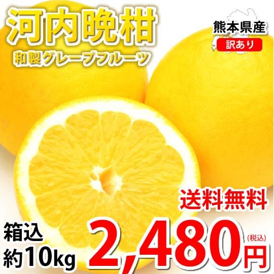 河内晩柑 文旦 10kg 箱込 (内容量9kg+不良果補償...