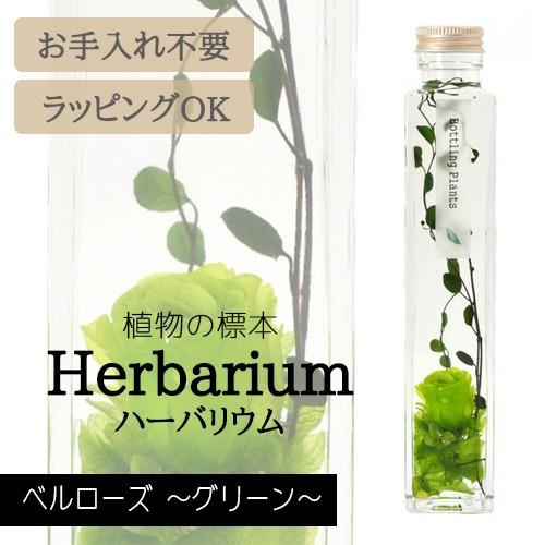 ハーバリウム BP-17105 ベルローズ 5.グリーン イ...