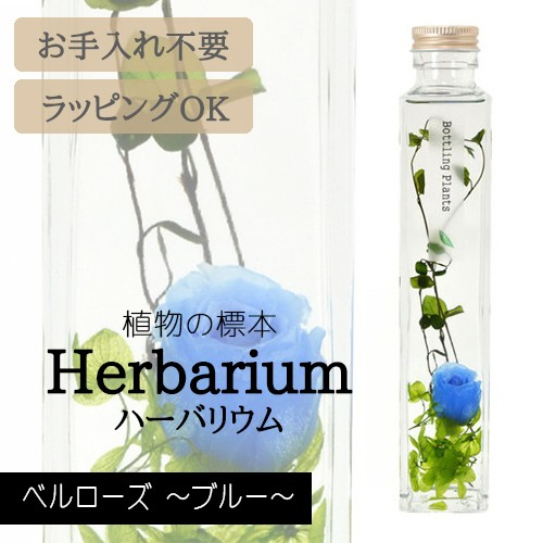 ハーバリウム BP-17105 ベルローズ 6.ブルー イン...