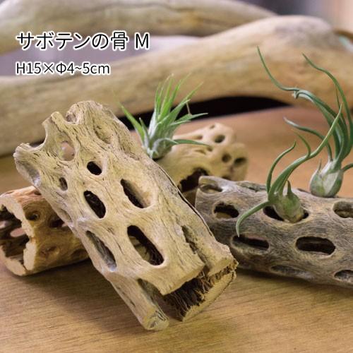 サボテンの骨 Mサイズ 長さ約15cm エアプランツ ...