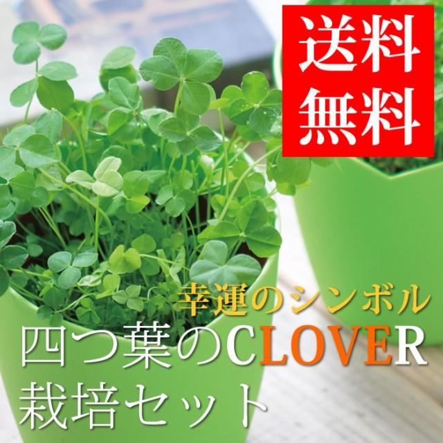 四つ葉のクローバー 栽培セット 栽培キット かわ...