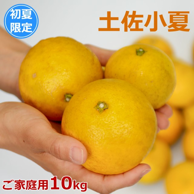 訳あり 土佐小夏 10kg 高知県産 産地直送 宅配便 ...